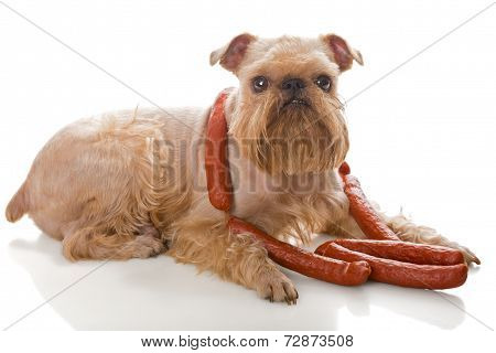 Dog And Sausages