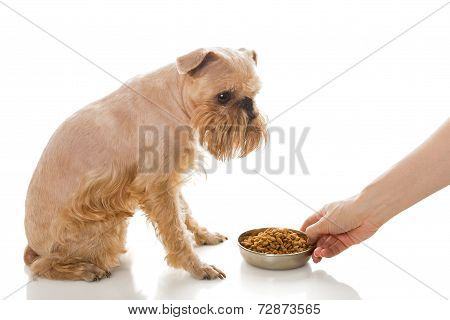 Griffon And Dry Food