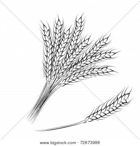 Hand drawing wheat ears