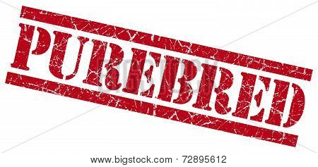 Purebred Red Grunge Stamp Isolated On White