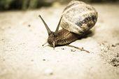 pic of hermaphrodite  - Snail close - JPG