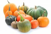 stock photo of backround  - Collection of pumpkins and winter squashes isolated on white backround - JPG