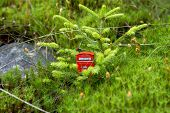 foto of phone-booth  - Red phone booth standing in the forest - JPG
