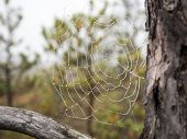 picture of cobweb  - The spider web  - JPG