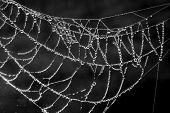 pic of cobweb  - The spider web  - JPG