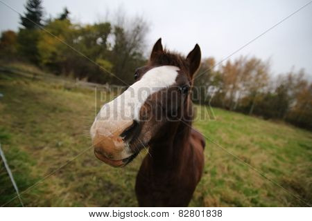 Wide-angle Macro Of Horse