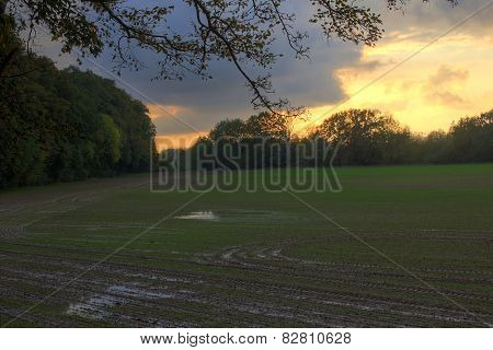 Field In The Evening