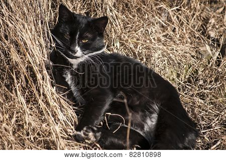 Countryside cat