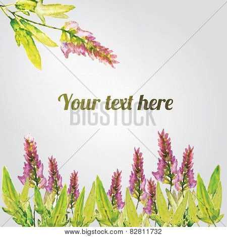 Vector watercolor natural sage plant background. Salvia. EPS10