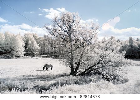 Horse In A Field - Infrared Photo