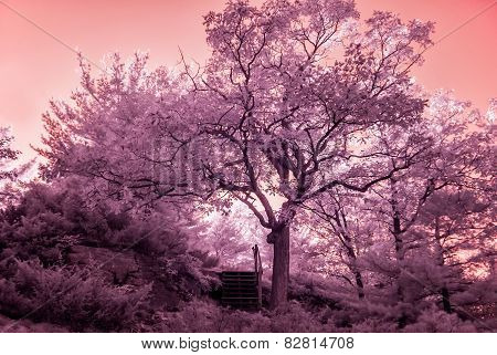 Infrared Sunlit Trees