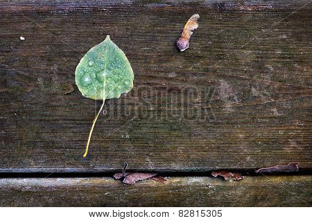Frosted Poplar Leaf And Maple Key