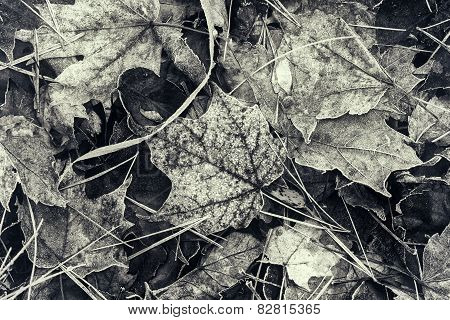 Frozen Fall Leaves - Sepia