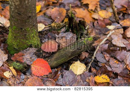 Mossy Tree And Fall Leaves