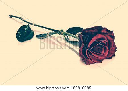 Red Rose - Vintage