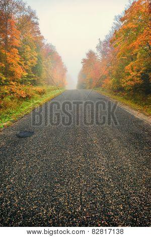 Misty Rural Road Through Autumn Trees - Vertical