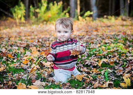 Boy Sits Holding A Maple Leaf In Each Hand