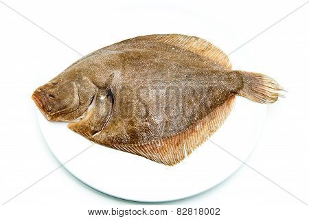 Fresh Raw Turbot Fish On White Plate