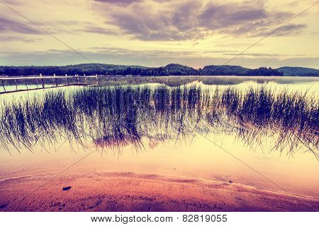 Reeds By The Tranquil Beach At Sunrise - Vintage