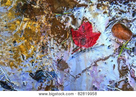 Red Maple Leaf On Gasoline Contaminated Beach
