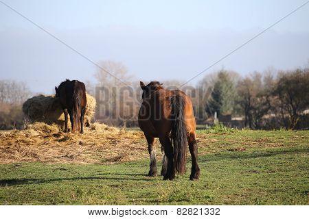 Eating Horses