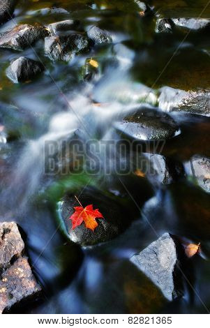 Red Leaf Resting On A Stone In A Stream