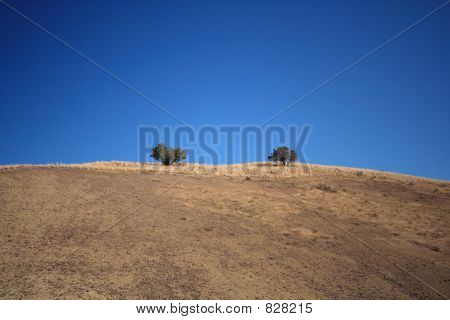 Lonely trees in the high desert