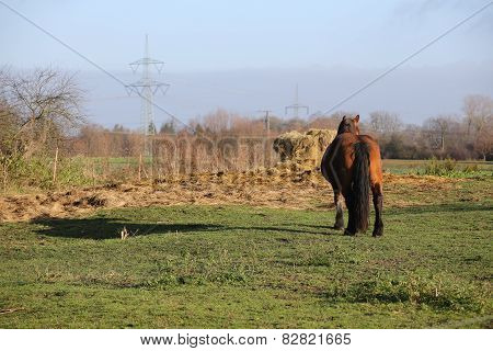 Heavy Horse And Hay Bale