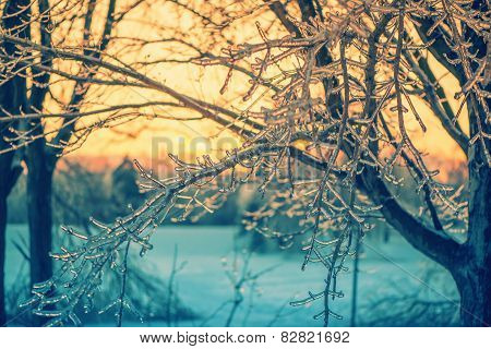 Ice Crystal Branches In The Glow Of A Sunset - Retro