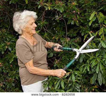 Pruning The Shrubbery