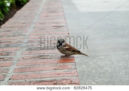 Lonely Sparrow