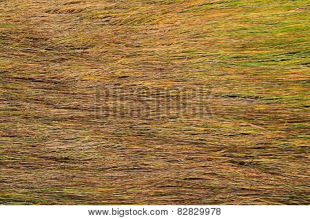 Background Of Long Wet Yellow Grass Texture