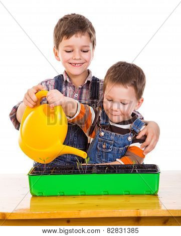 Two kids watering the seedling