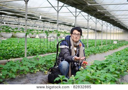 Asian Handsome Tourist Man Wearing Overcoat In Strawberry Greenhouse, Harvest, Fresh