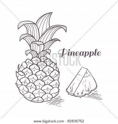 Engraving Pineapple In Vector