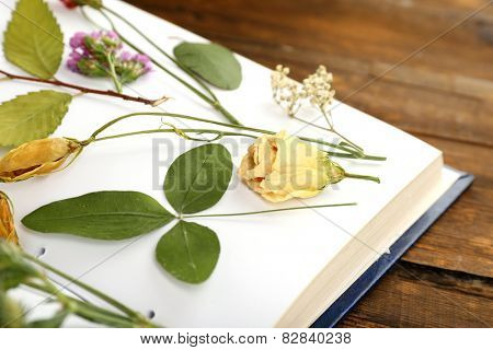 Dry up plants on book on table close up