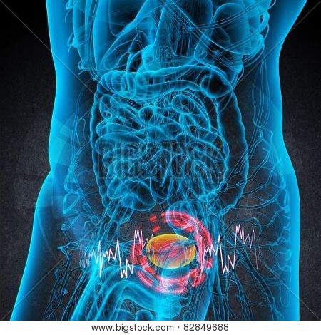3D Render Medical Illustration Of The Bladder Pain
