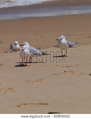 Birds on the Australian beach
