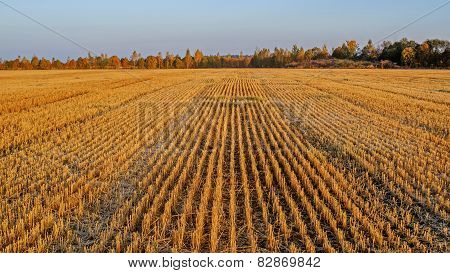 Field after harvest.