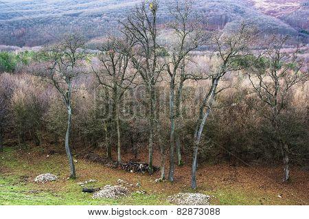 Seasonal Deciduous Forest