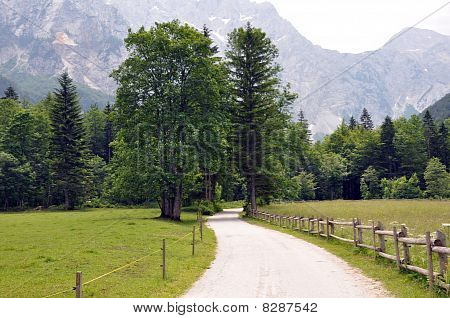 Scenic path with trees