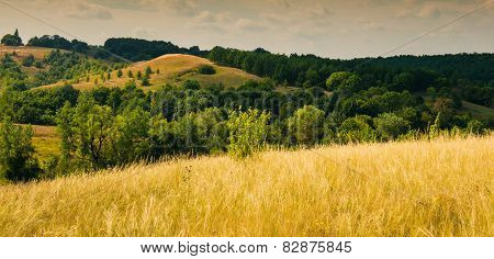 Steppe And Forest