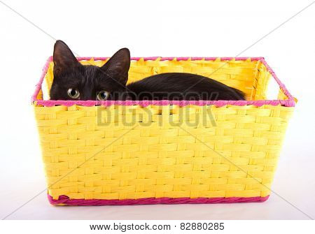 Adorable black cat hiding in a yellow basket, peeking over the edge