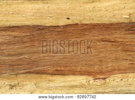 Tree Trunk Texture