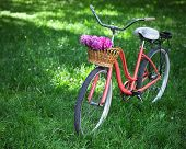 stock photo of spring break  - Vintage bicycle with basket with peony flowers in the spring park - JPG