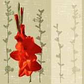image of gladiolus  - decorative background with red gladiolus - JPG