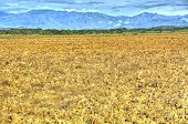 foto of plowed field  - Plowed field with mountains in the background in the countryside of Panama - JPG