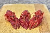 stock photo of craw  - Three Red river crayfish on cutting board in front perspective - JPG