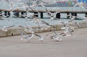 picture of flock seagulls  - Cityscape  - JPG