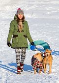 stock photo of pit-bull  - Young woman walking with two dogs of breed American Pit Bull Terrier winter  - JPG